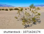 small tree with yellow flowers...   Shutterstock . vector #1071626174