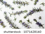 Rosemary Branches In Blossom On ...
