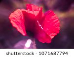 single pink and red color tone... | Shutterstock . vector #1071687794