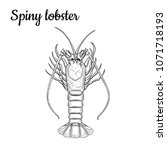 spiny lobster. crustaceans.... | Shutterstock .eps vector #1071718193