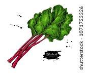 rhubarb vector drawing set.... | Shutterstock .eps vector #1071723326