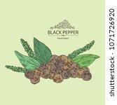 black pepper  plant  pepper and ...   Shutterstock .eps vector #1071726920