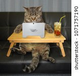 Stock photo the cat with a laptop is sitting on the black leather sofa and drinking a cold tea 1071757190