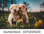 Stock photo super cute puppies in a field of flowers 1071814103
