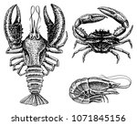 Crustaceans, shrimp, lobster or crayfish, crab with claws. River and lake or sea creatures. Freshwater aquarium. Seafood for the menu. Engraved hand drawn in old vintage sketch. Animals of the ocean.