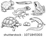 Reptiles And Amphibians Set....