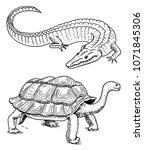 crocodile and turtle. reptiles... | Shutterstock .eps vector #1071845306