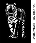 tiger drawing sketch | Shutterstock .eps vector #1071866723