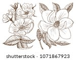 wedding botanical flowers in... | Shutterstock .eps vector #1071867923