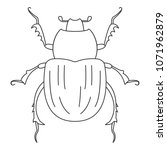beetle icon. simple element... | Shutterstock . vector #1071962879