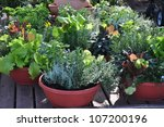 Fresh Herbs Grown In Compact...