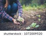farmer woman  planting trees in ... | Shutterstock . vector #1072009520