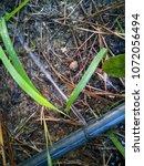 burst poly pipe  | Shutterstock . vector #1072056494