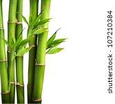 Fresh Bamboo Isolated On White...