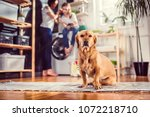 small yellow dog sitting on the ... | Shutterstock . vector #1072218710