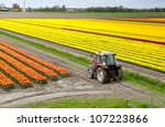 Old Tractor On The Dutch Tulip...