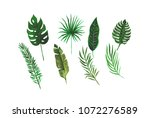 tropical exotic leaves of palm... | Shutterstock . vector #1072276589