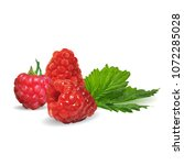 fresh  nutritious and tasty... | Shutterstock .eps vector #1072285028