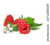 fresh  nutritious and tasty... | Shutterstock .eps vector #1072285034