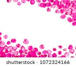 Stock photo white background with romantic pink rose petals 1072324166