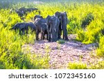 the herd of elephants moves to... | Shutterstock . vector #1072345160