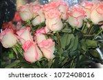 beautiful decorative blooming... | Shutterstock . vector #1072408016