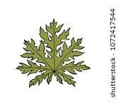papaya leaf. design element on...   Shutterstock .eps vector #1072417544