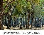 mahogany forest   national park ... | Shutterstock . vector #1072425023