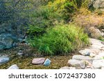 reed next to a valley stream | Shutterstock . vector #1072437380
