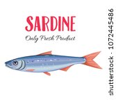 vector sardine. icon badge fish ... | Shutterstock .eps vector #1072445486