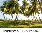 beautiful palm trees with a... | Shutterstock . vector #1072490003