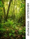 sunlight on wild green forest... | Shutterstock . vector #1072501484