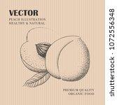 peach hand drawn illustration.... | Shutterstock .eps vector #1072556348