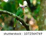 a beautiful bird red bearded... | Shutterstock . vector #1072564769