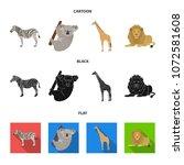 african zebra  animal koala ...   Shutterstock .eps vector #1072581608