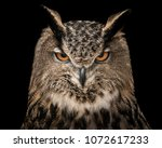 A Frontal Portrait Of An...
