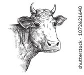 sketches of face cow drawn by...   Shutterstock .eps vector #1072621640