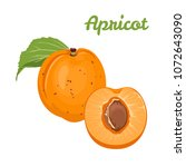 apricot isolated on white... | Shutterstock .eps vector #1072643090
