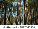 a birdhouse in a pine forest | Shutterstock . vector #1072683506