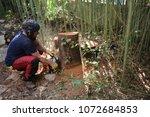 man cutting a tree trunk.... | Shutterstock . vector #1072684853