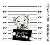 Polar Bears Prisoner. Bear...