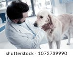 Stock photo i like animals pleasant nice smart mean wearing labcoat and holding a dog while working in the vet 1072739990