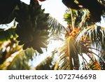 true tilt shift view from... | Shutterstock . vector #1072746698