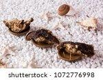 nourishing chinese herbal...   Shutterstock . vector #1072776998