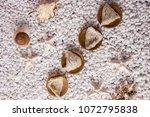nourishing food bird nest   Shutterstock . vector #1072795838