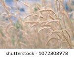 beautiful dry meadow flowers in ... | Shutterstock . vector #1072808978