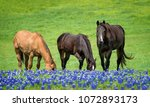 Three Horses Grazing In Texas...