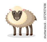 adorable fluffy baby sheep with ... | Shutterstock .eps vector #1072927658