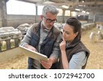 sheep breeder with veterinary... | Shutterstock . vector #1072942700