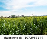 view of the nature  in the... | Shutterstock . vector #1072958144